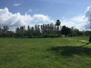 Land in Bangtao for sale ID.19PL113 1
